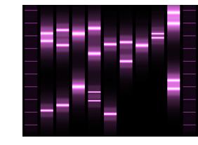 Genoportrét - obraz z Vašej DNA